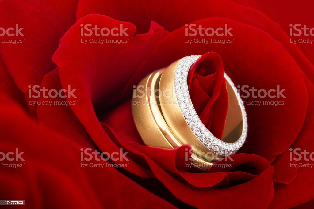 Pair of Wedding Rings in a Rose royalty-free stock photo