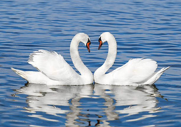 catholic singles in white swan White swan's best free dating site 100% free online dating for white swan singles at mingle2com our free personal ads are full of single women and men in white swan looking for serious relationships, a little online flirtation, or new friends to go out with.