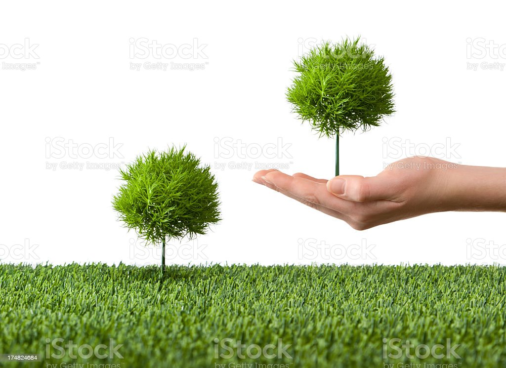 Pair of young trees royalty-free stock photo