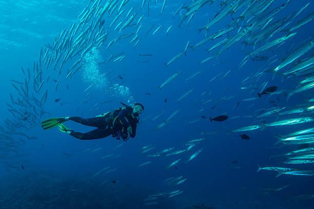 Palau-Micronésia - foto de acervo