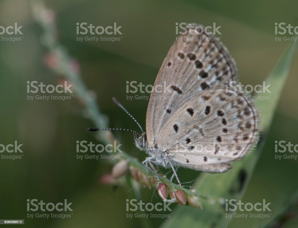 Pale grass blue stock photo