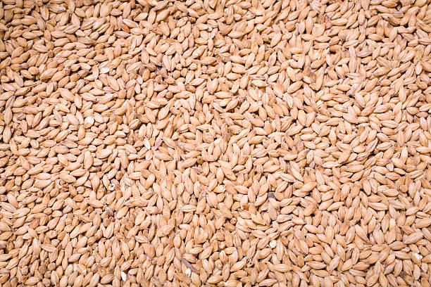 Pale Malt stock photo