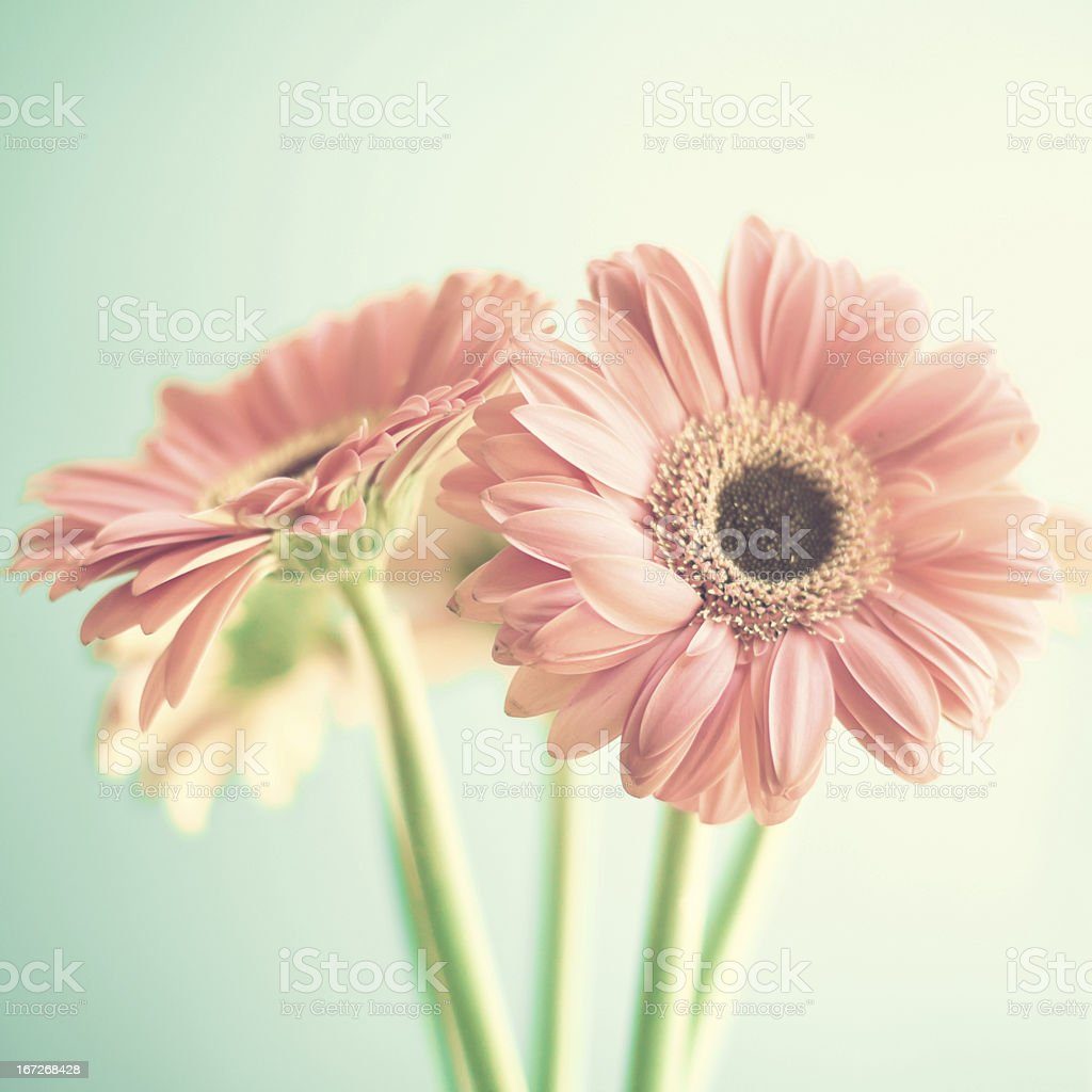 Pale pink flowers stock photo