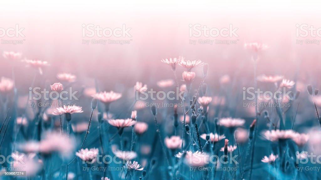 Flores del bosque de color rosa pálido sobre un fondo de azul hojas y tallos. Imagen de macro natural artística. Concepto de primavera verano. Flores silvestres. - Foto de stock de Arte libre de derechos