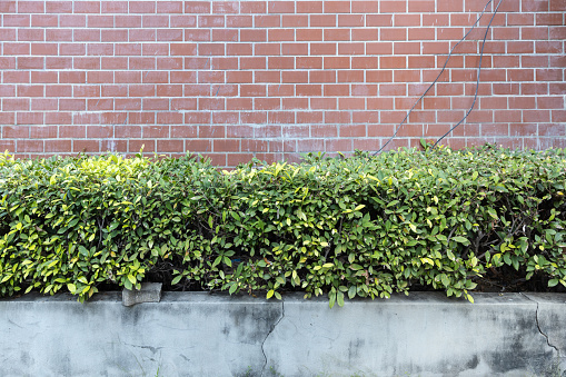 pale red brick wall with plant outdoor garden.