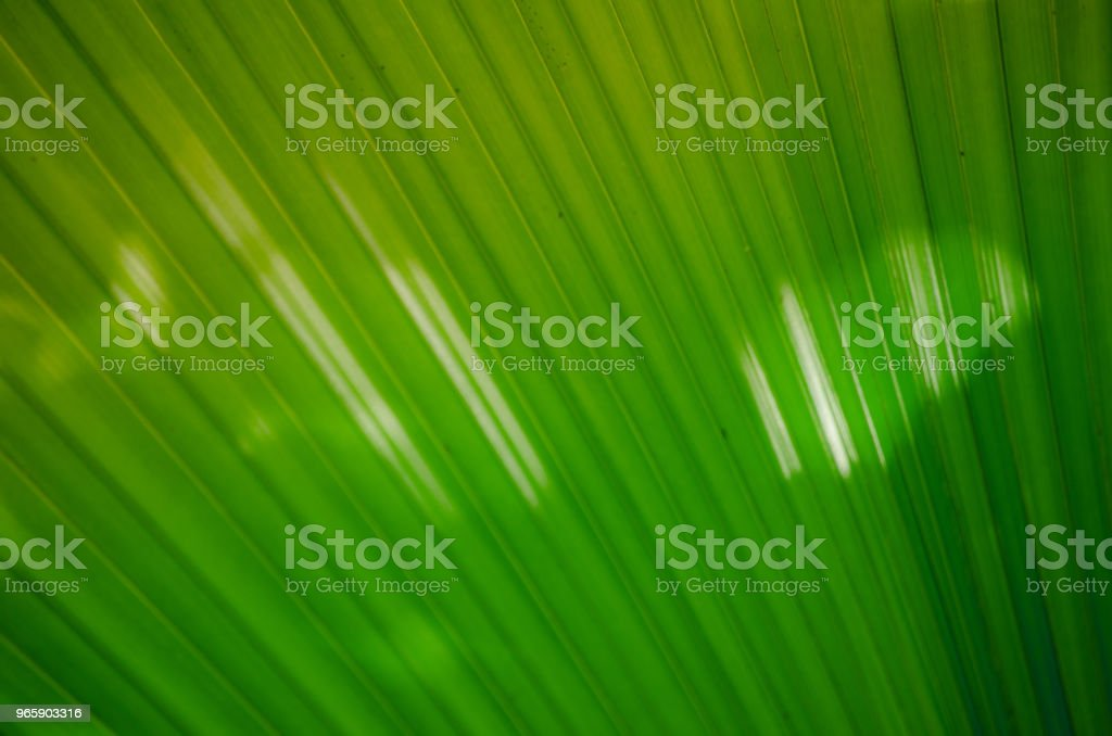 Paleira em leque - Royalty-free Abstract Stock Photo