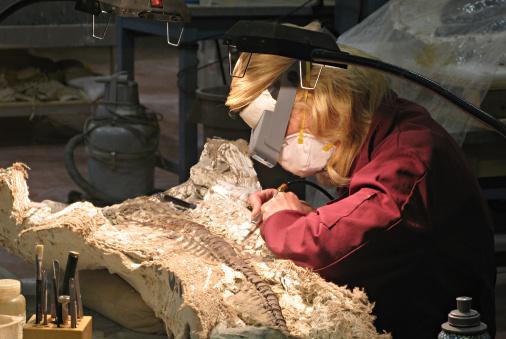 paleontologist working on a dinosaur fossil