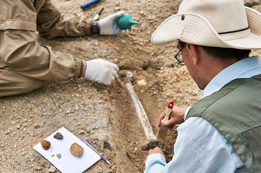 two paleontologists extract fossilized bone from the ground in the desert, focus on a close researcher
