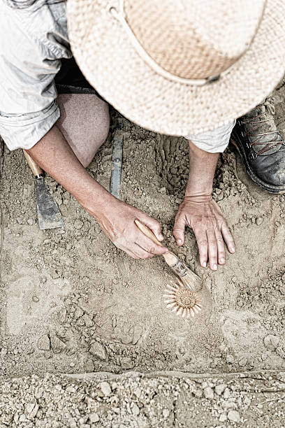 Paleontology Paleontologist working in the field, recovering ancient ammonite fossil archaeology stock pictures, royalty-free photos & images