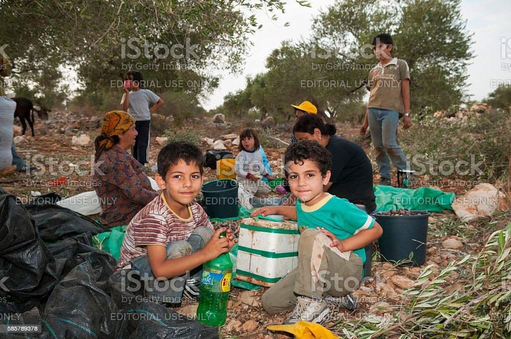 Palestinian family harvesting olives in Zababdeh, West Bank stock photo