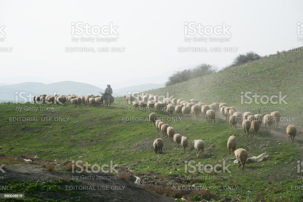 Palestinian shepherd and flock in West Bank stock photo