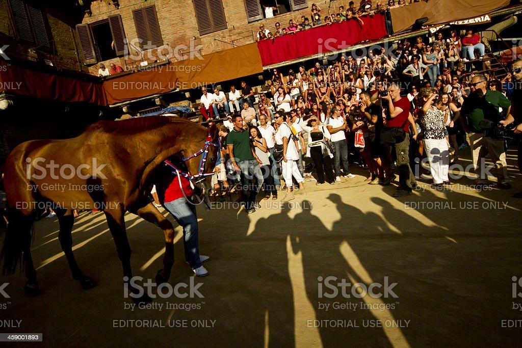 Palio Di Siena Horse Entering Piazza Del Campo stock photo