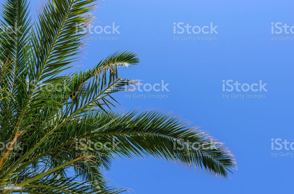 Palm against the sky. royalty-free stock photo
