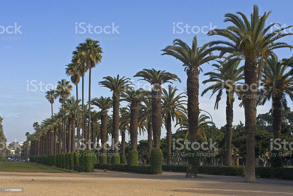 Palm alley in city park royalty-free stock photo