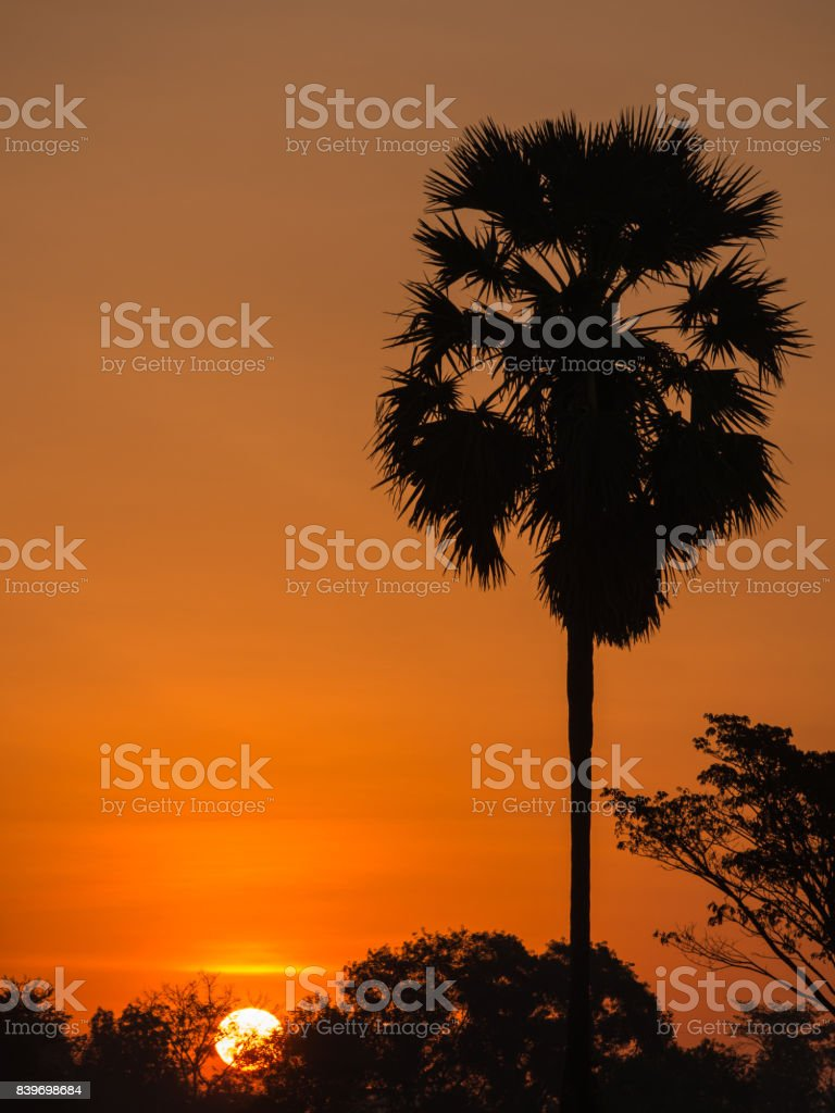 Palm Alone Behind The Sun Rise stock photo