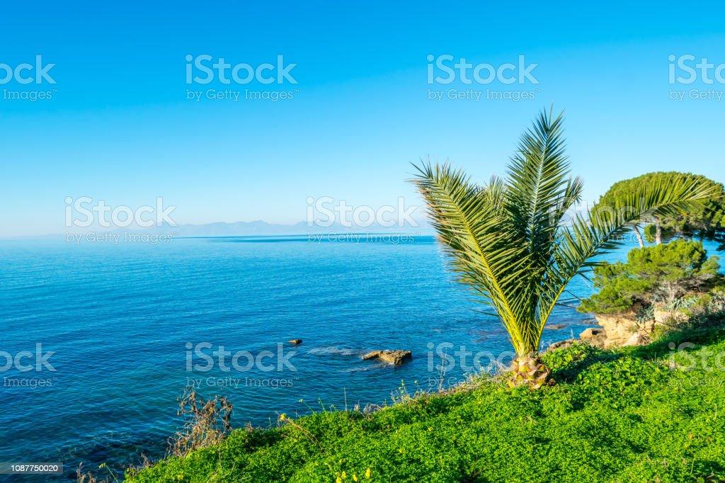 Palm langs de blauwe Middellandse Zee op een zonnige dag aan de zuidelijke kust van het Italiaanse foto