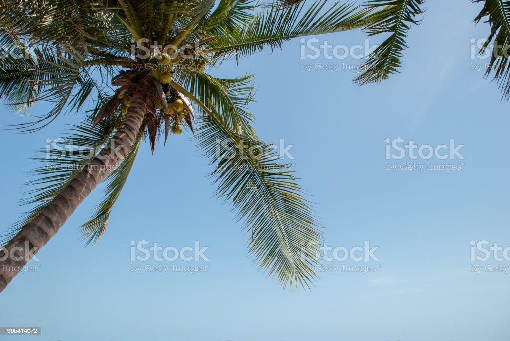 팜형 및 blue sky - 로열티 프리 0명 스톡 사진