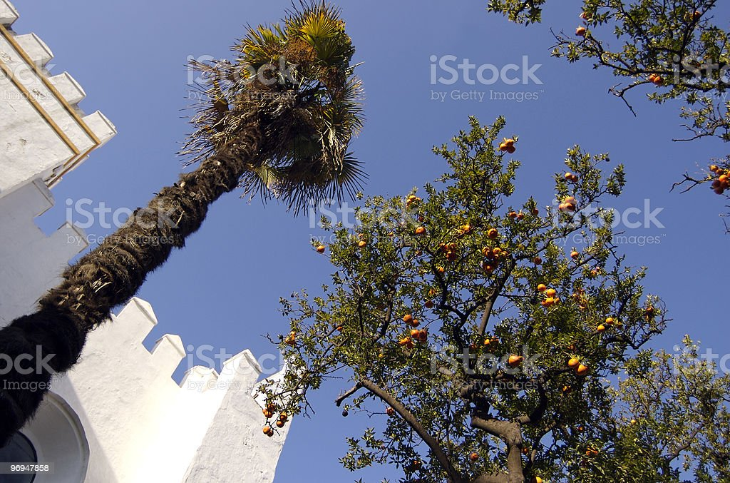 Palm and orange trees, Alcazar, Seville, Spain royalty-free stock photo