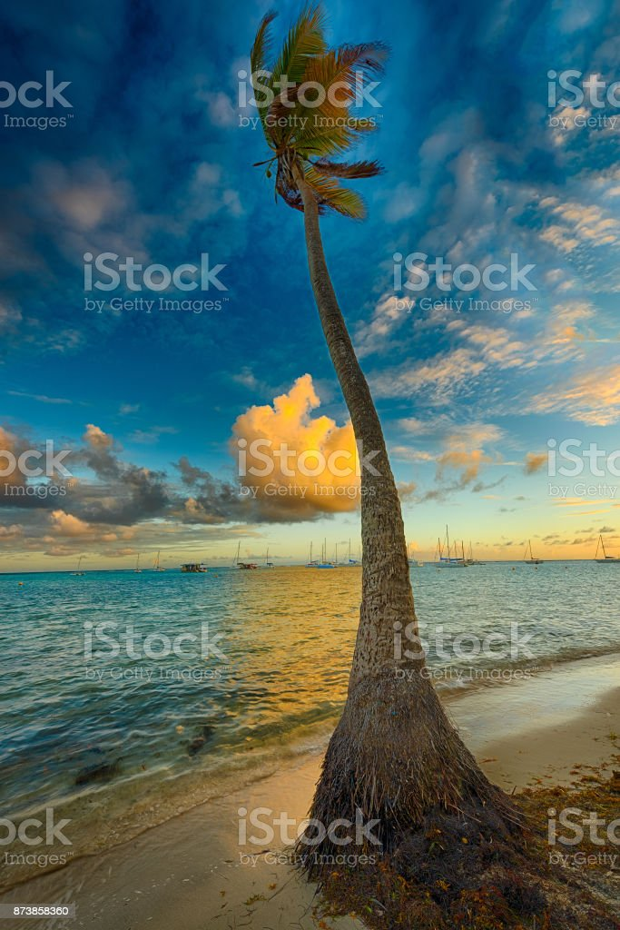Palm at sunset time stock photo