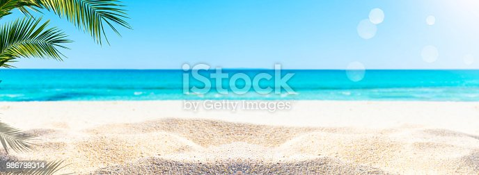 istock palm at the sand beach 986799314