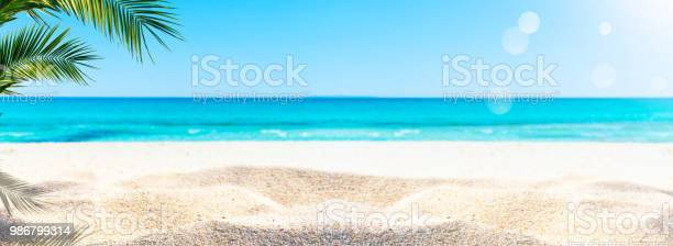 Palm at the sand beach picture id986799314?b=1&k=6&m=986799314&s=612x612&h=d3eccy6zhvwobxhaq79gmazd4sqghsfuasqgafuqbfe=