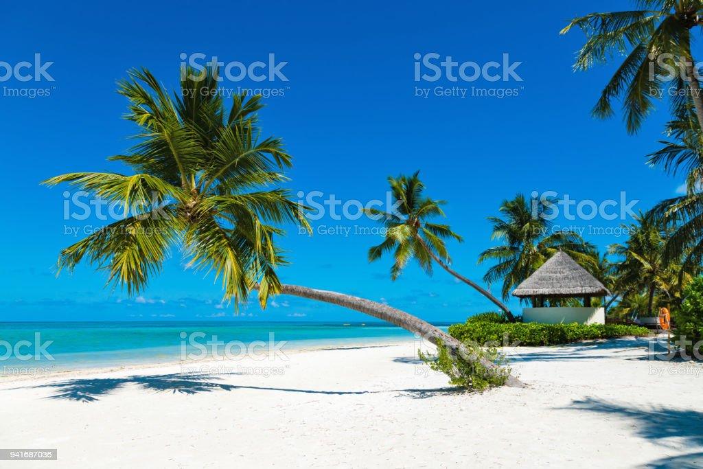 Im tropischen Paradies Beach Canareef Resort Malediven Herathera Island Palm – Foto