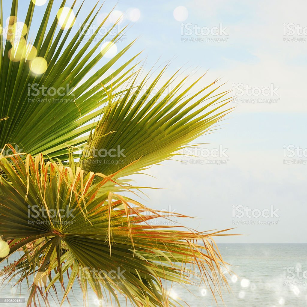Palm background royaltyfri bildbanksbilder