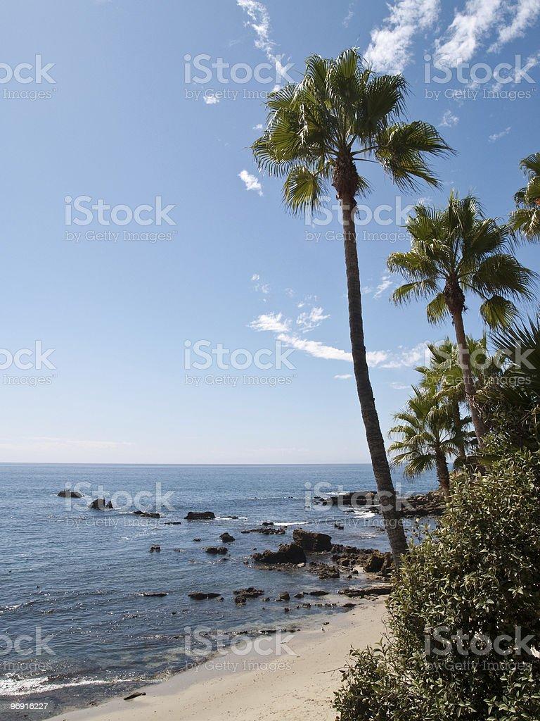 palm beach with rocks royalty-free stock photo