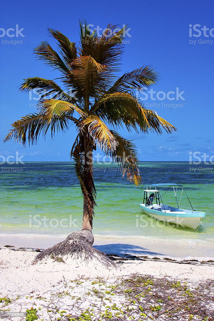 palm   blue lagoon relax and boat stock photo
