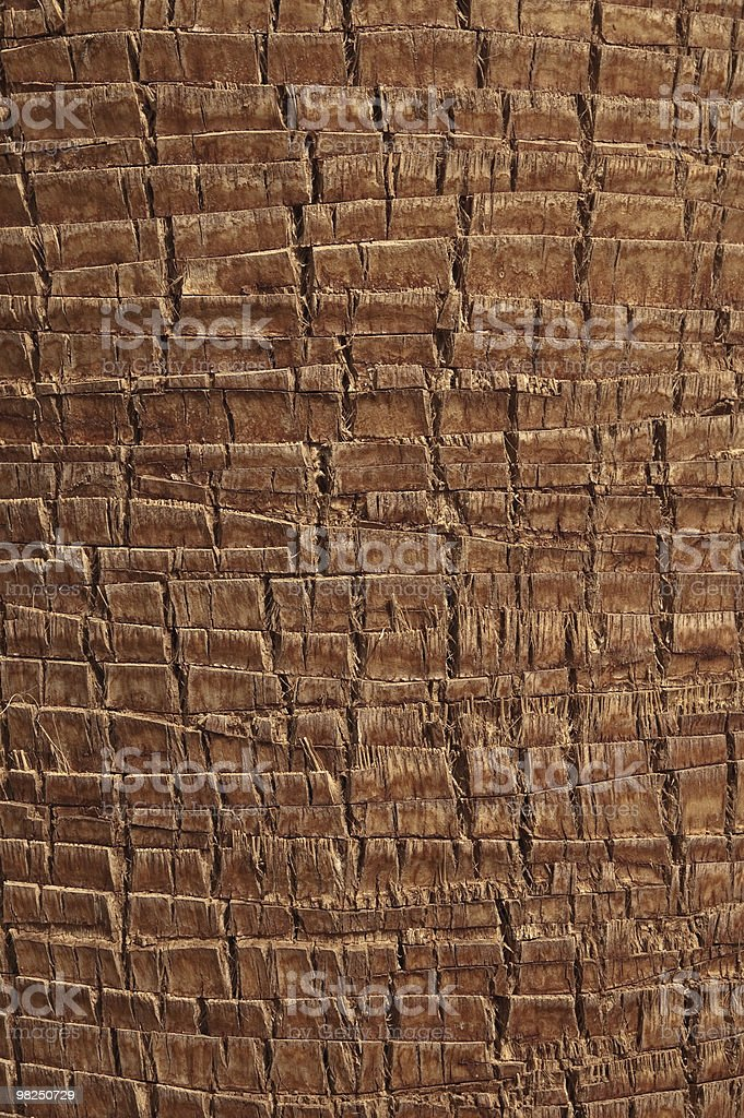 Palm body and bark royalty-free stock photo