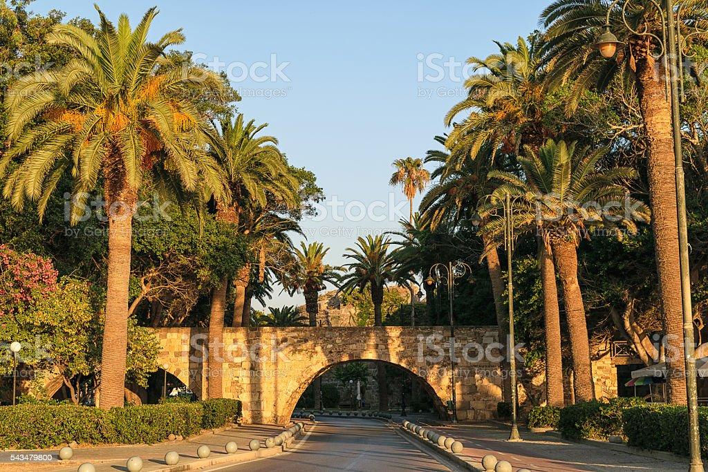 Palm boulevard,Kos town. stock photo
