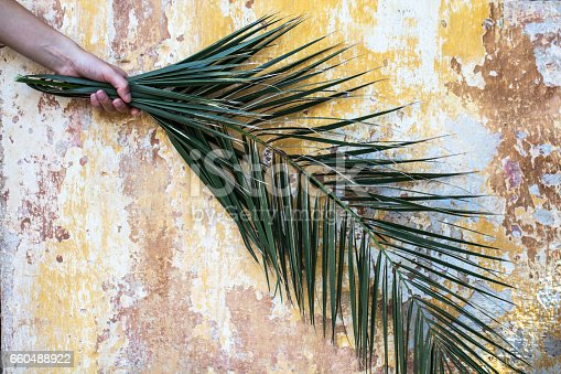 istock Palm branch in woman hand and beautiful old vintage cracked orange paint wall 660488922