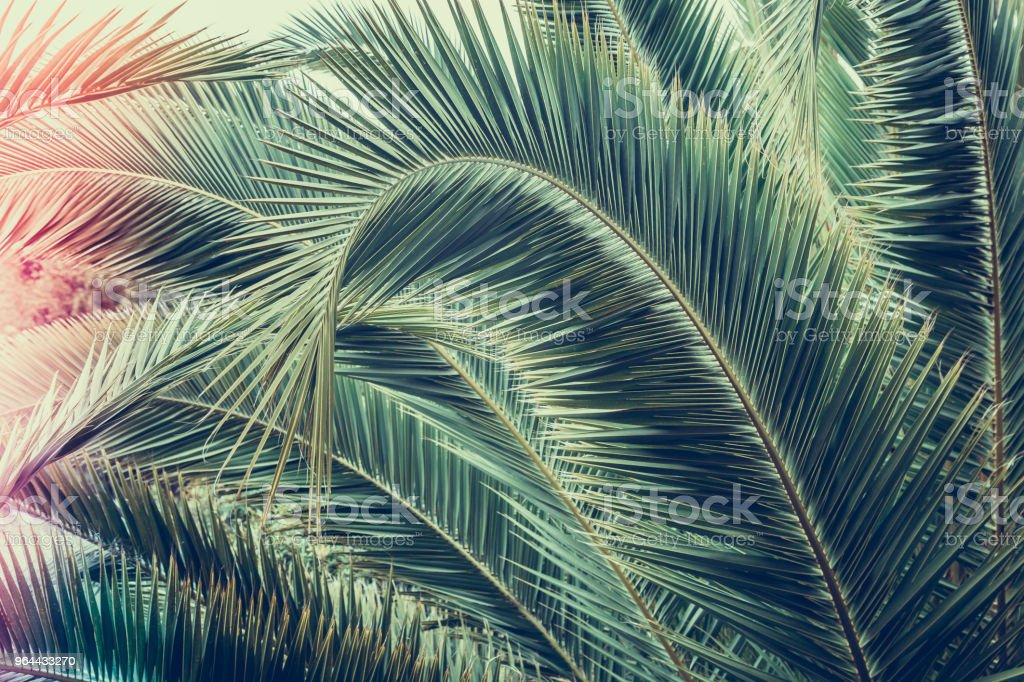 Palm branch. Leaves of a palm tree, close-up. - Royalty-free Abstract Stock Photo