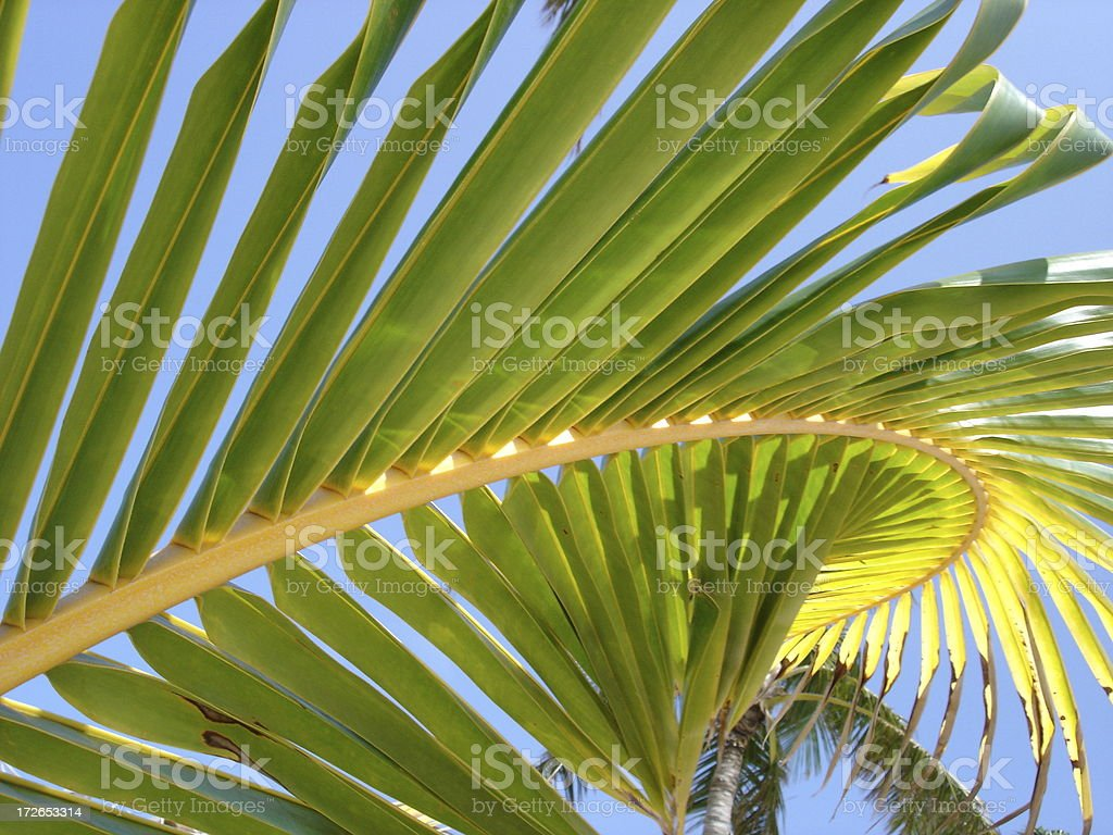 Palm Branch royalty-free stock photo