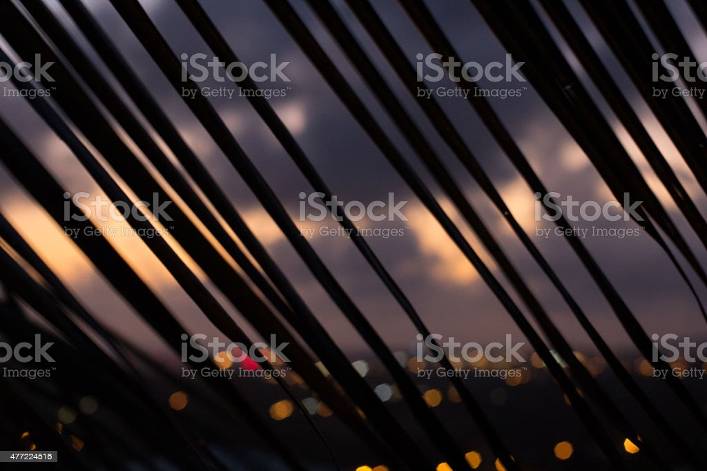 Palm branch silhouette at sunset - diagonal lines stock photo