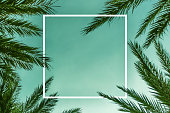 Palm Branches Background Template with White Square Layered Effect