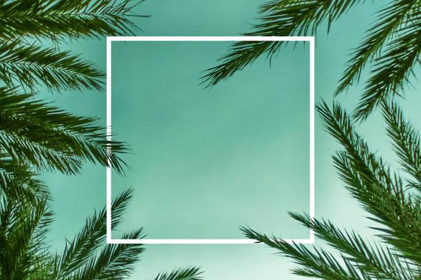 棕櫚分支背景範本與白色正方形 - 熱帶式樣 個照片及圖片檔