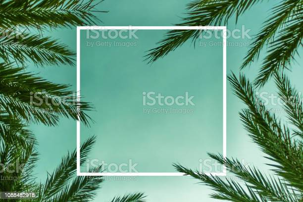 Photo of Palm Branches Background Template with White Square
