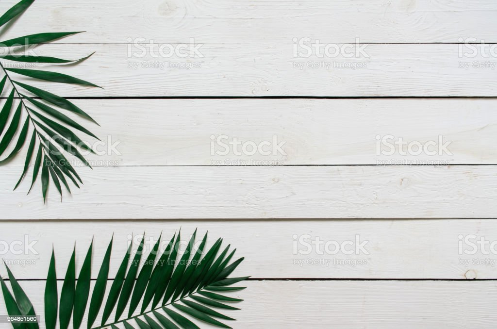 Palm branches on white wooden background royalty-free stock photo