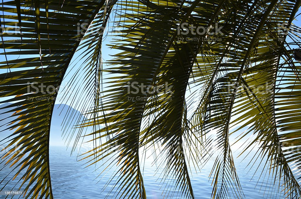 Palm branches royalty-free stock photo