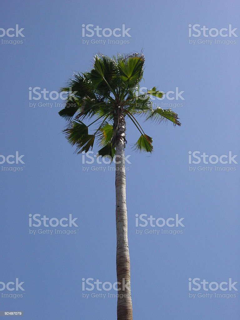 palm - centered royalty-free stock photo
