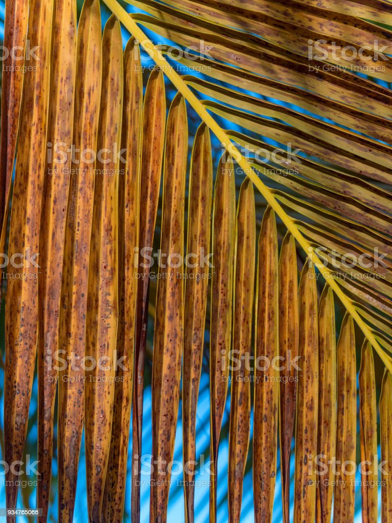 Palm Detail stock photo