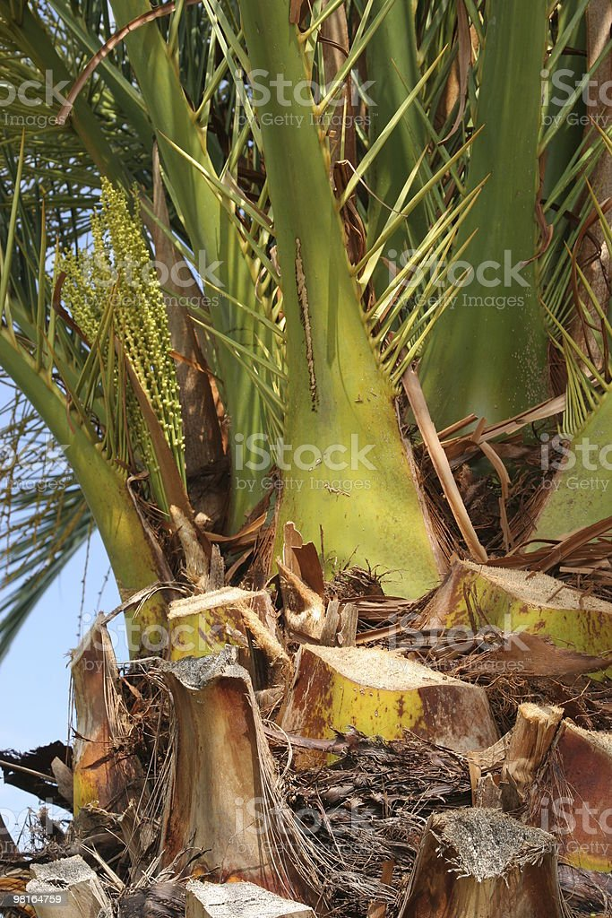 palm detail royalty-free stock photo