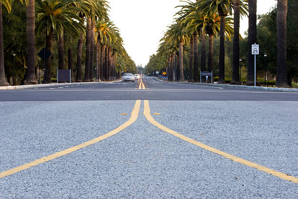 Palm Drive stock photo