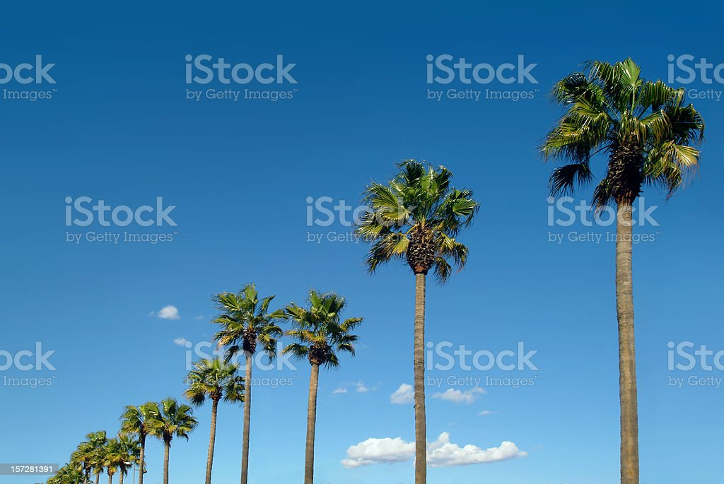 Palm drive royalty-free stock photo