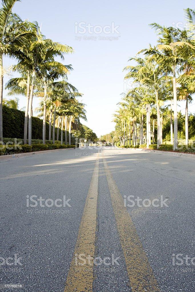 palm drive royalty-free stock photo