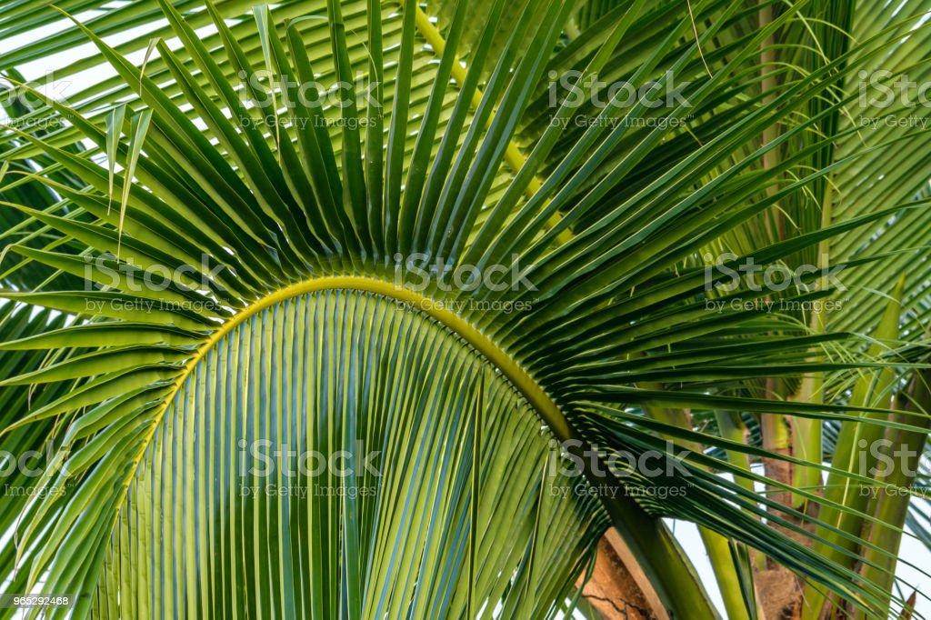 Palm frond detail zbiór zdjęć royalty-free