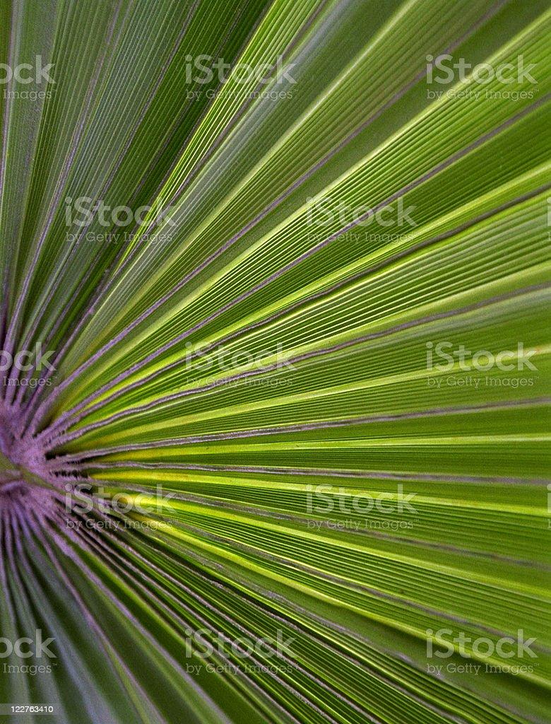 Palm frond pattern stock photo