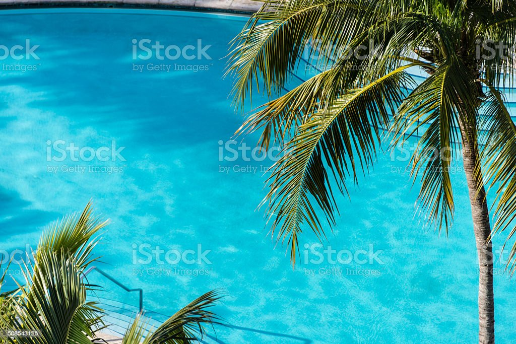 Palm fronds above an inviting swimming pool stock photo