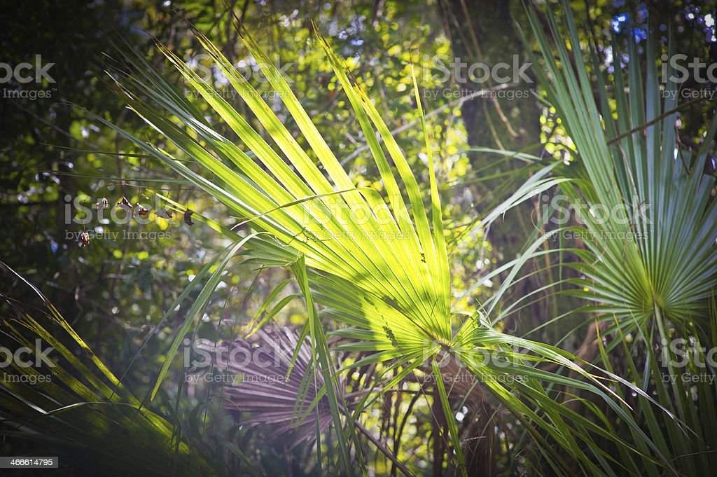 Palm Fronds and Sunlight royalty-free stock photo